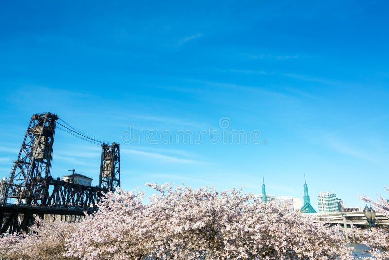 Stålbro och Cherry Blossoms royaltyfria bilder