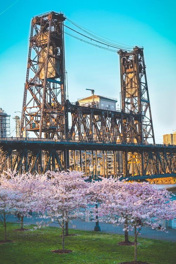 Stålbro Portland ELLER Cherry Blossom Trees arkivfoton