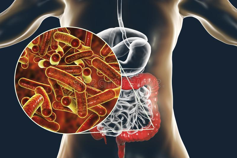 Stång-formad bakterieShigella som orsakar foodborne infektionshigellosis eller dysenteri vektor illustrationer