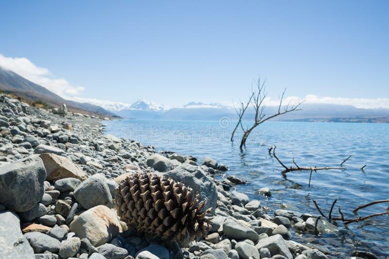 Stöcke und riesiger Kiefernkegel im ruhigen Wasser auf steinigem Ufer von See lizenzfreie stockbilder