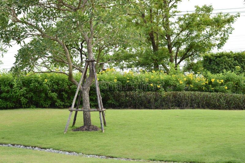 Stödja förhindra fallande träd i den gröna gräsmattan, kopieringsutrymme royaltyfri foto