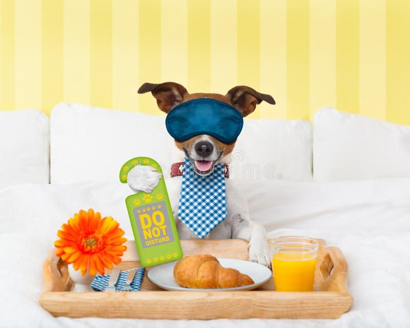 Stör inte tecknet med hunden royaltyfri bild