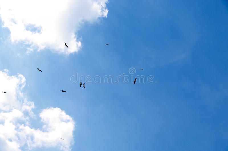12 Störche im Himmel lizenzfreie stockfotografie
