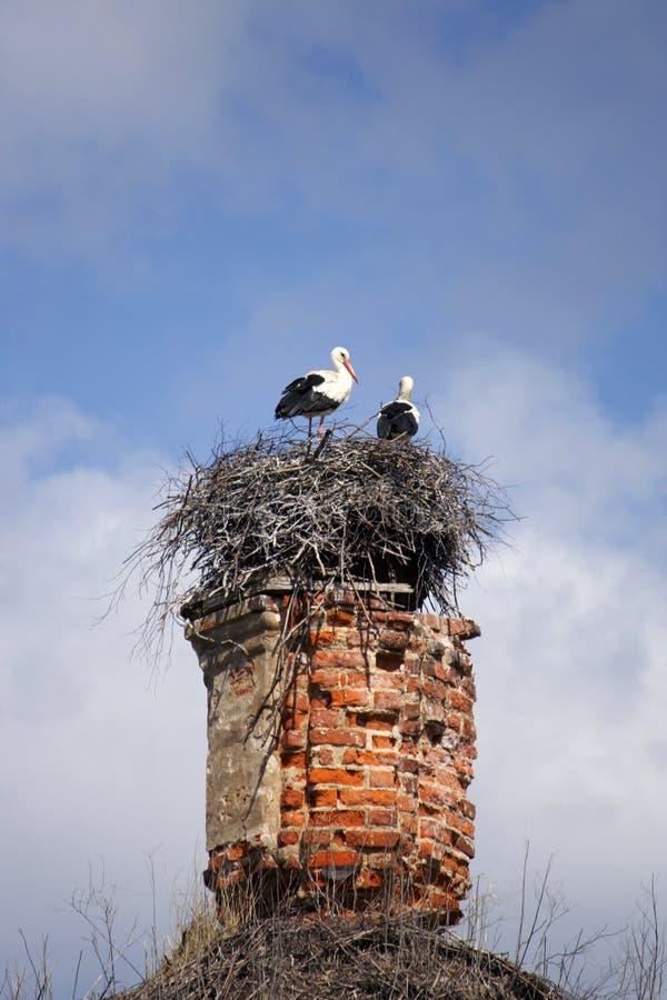 Störche im Nest auf der zerstörten Kirche stockfotografie