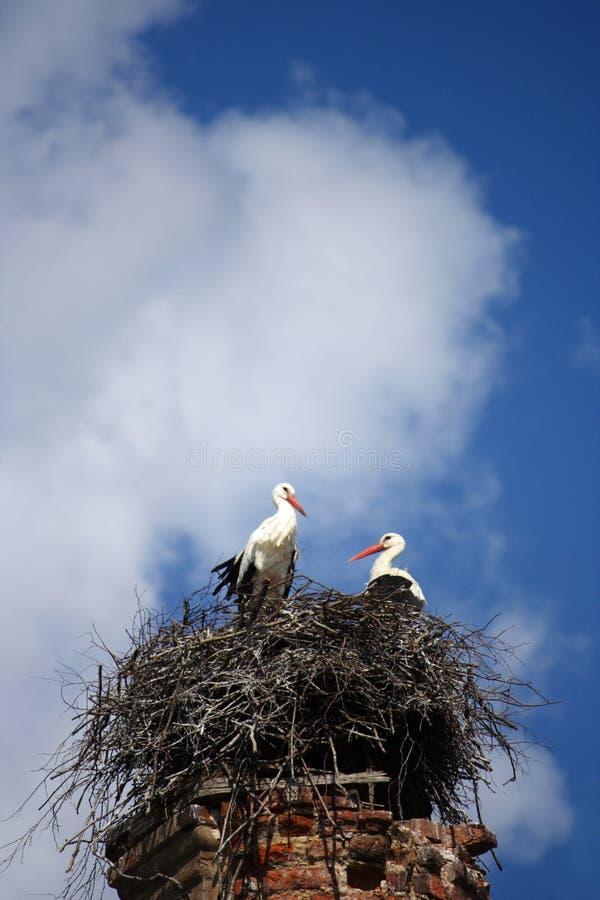 Störche im Nest auf der zerstörten Kirche lizenzfreie stockfotografie