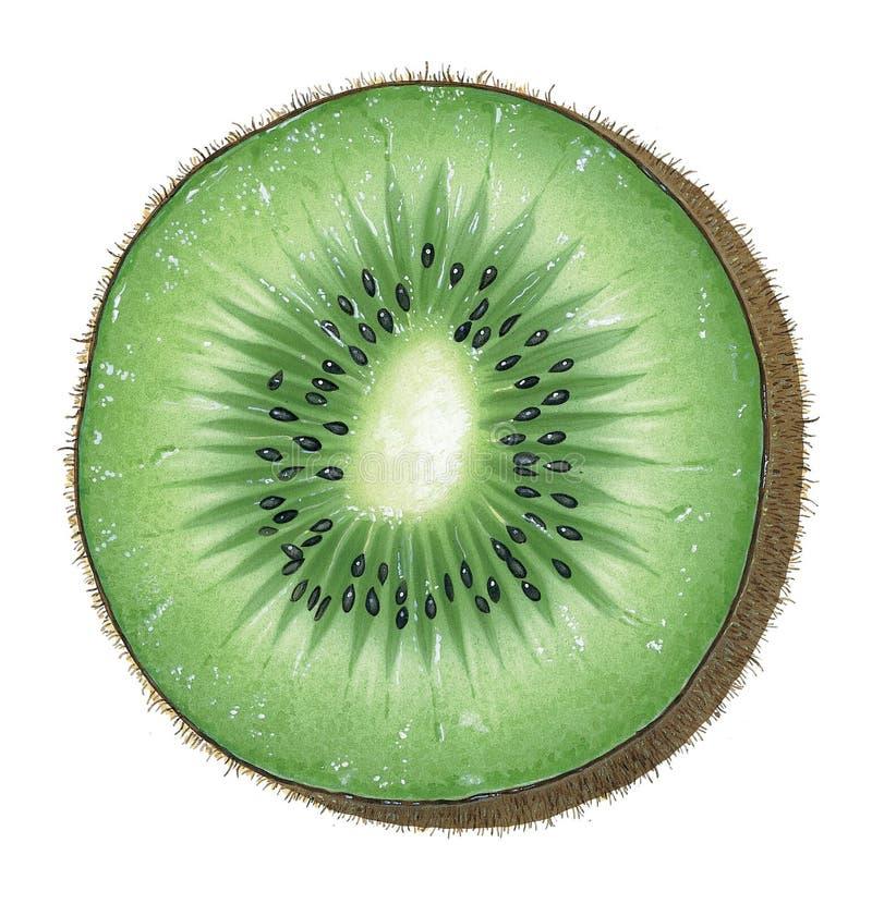 Stück der Kiwi stock abbildung