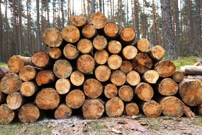 Stück Holz-Wald stockbilder