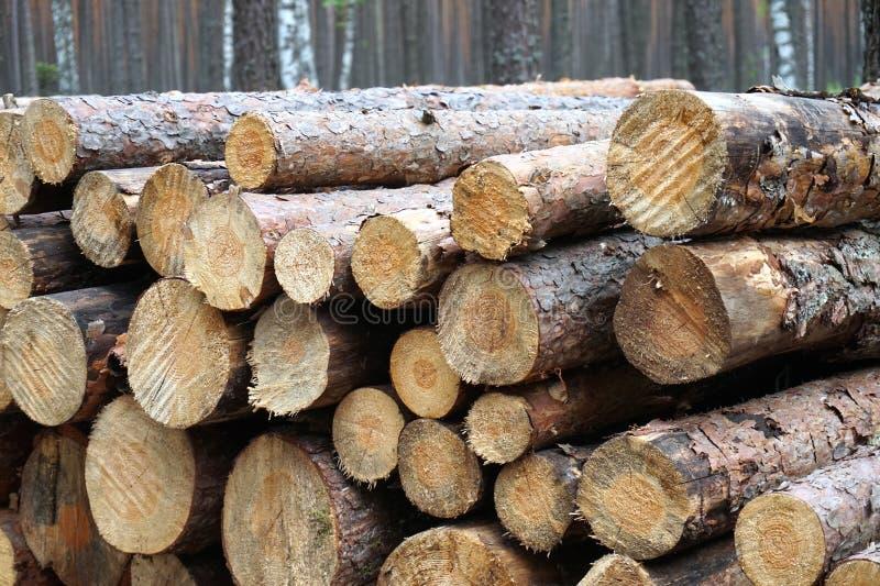 Stück Holz-Wald lizenzfreie stockbilder