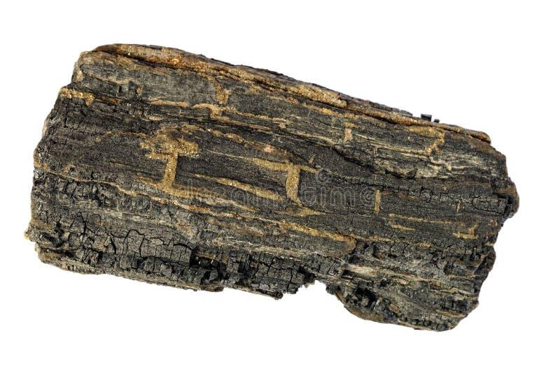 Stück karbonisiertes Holz von der Insel von Wight stockfotografie