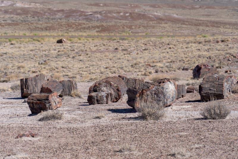 Stücke der Spalte des versteinerten Holzes, die jetzt den prehistroic Klotz zu Kristallsteinmineralien am versteinerten Wald gema lizenzfreies stockbild