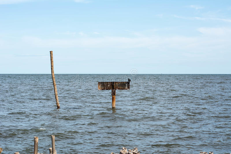 Stümpfe im Meer stockbild