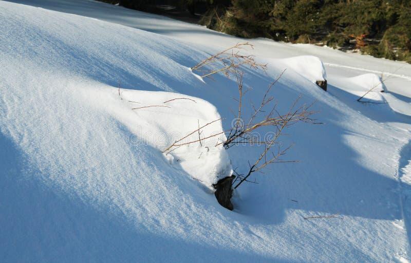 Stümpfe unter dem Schnee lizenzfreie stockfotos