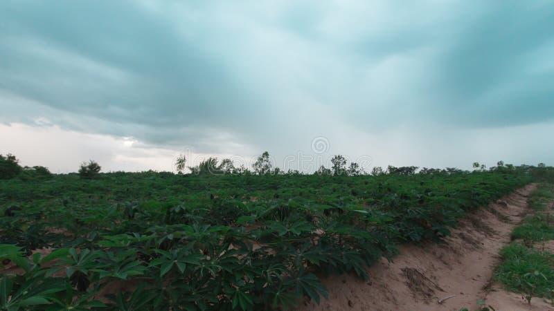 Stürmisch und Wolke bewegt Tapiokabaum im Bauernhof stockfotos
