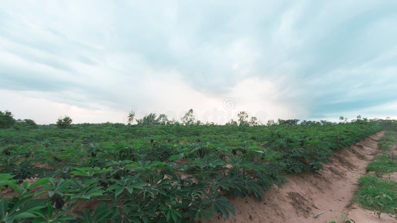 Stürmisch und Wolke bewegt Tapiokabaum im Bauernhof lizenzfreie stockfotografie