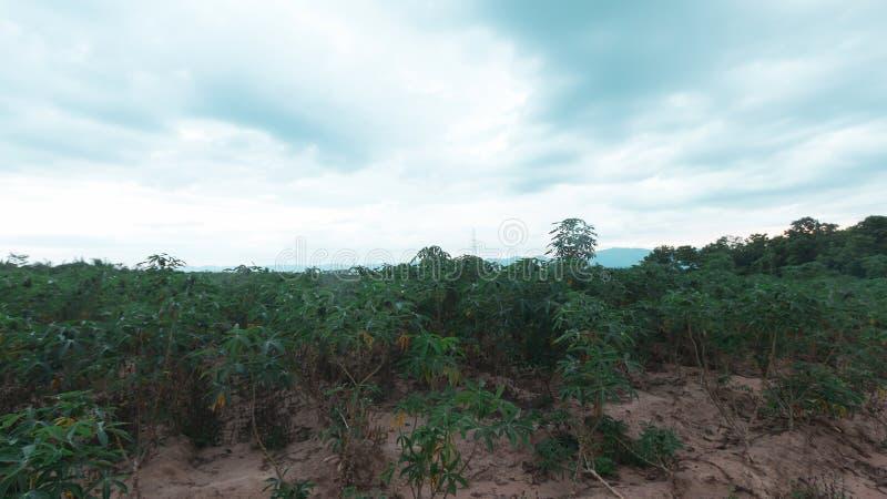 Stürmisch und Wolke bewegt Tapiokabaum im Bauernhof stockfotografie