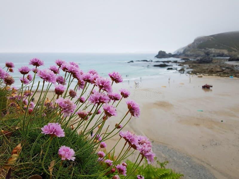 St. Agnes Heritage Coast in Cornwall stockbilder