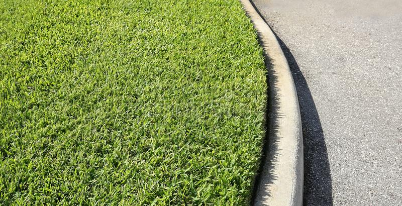 St. Augustine grass royalty free stock photography