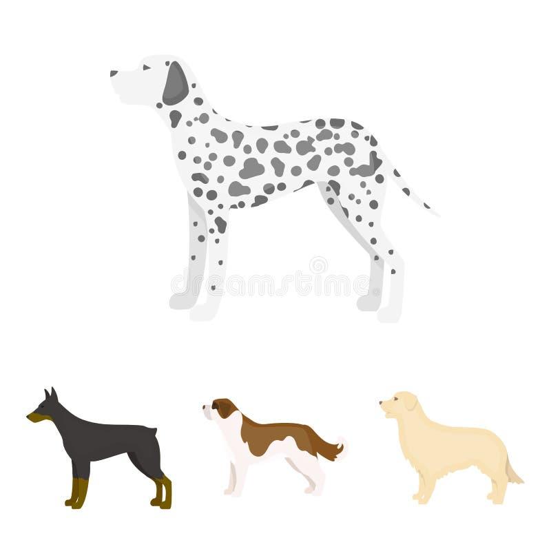St Bernard, perro perdiguero, doberman, Labrador Las razas del perro fijaron iconos de la colección en la acción del símbolo del  stock de ilustración