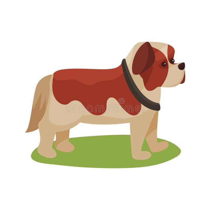 St Bernard pies, purebred zwierzęcia domowego zwierzęcia pozycja na zielonej trawy kolorowej ilustraci ilustracja wektor