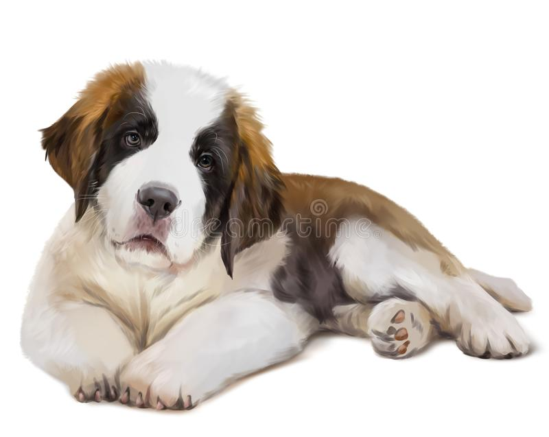 St. Bernard`s dog is down. Watercolor painting stock illustration
