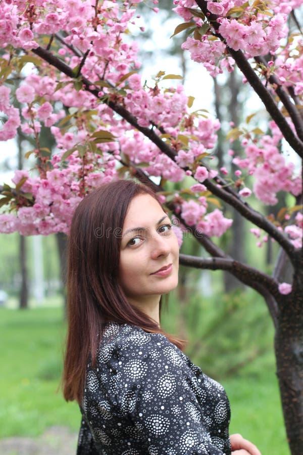 St?ende av den h?rliga flickan i det sakura tr?det Sakura blommor omger flickan Sakura filial vid hennes framsida japansk tree arkivbild