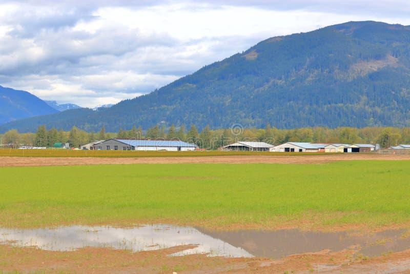 St?ende vatten p? jordbruks- land arkivfoton