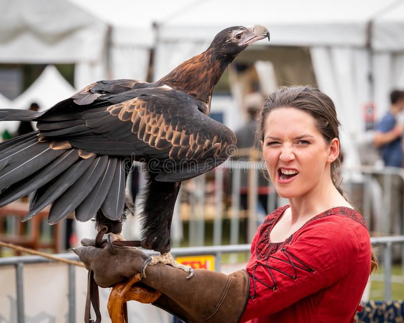 Captive wedge tailed eagle with female trainer / handler in red dress looking at camera getting ready for flight exhibition at a. St Ives, Sydney, Australia royalty free stock photography