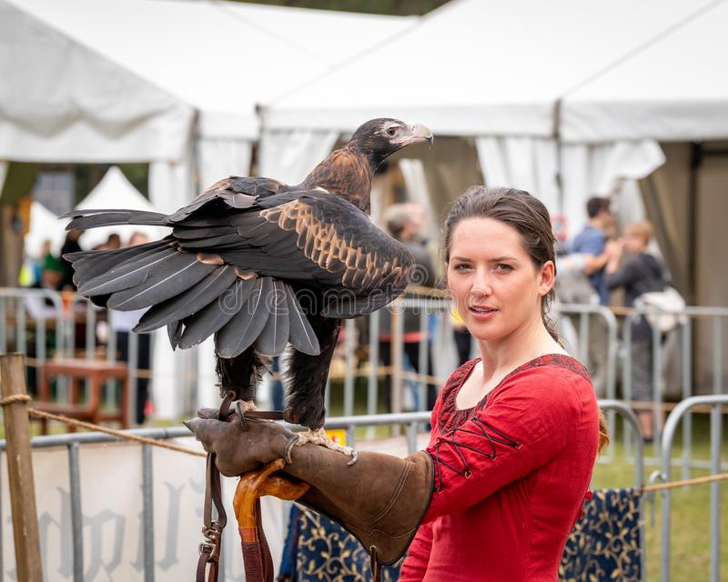 Wedge tailed eagle perched on gloved hand of female trainer / handler in red dress, getting ready for flight exhibition at a show. St Ives, Sydney, Australia stock photos