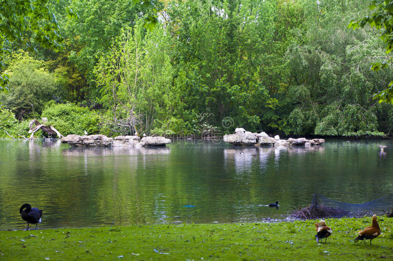 St James park, nature island in the middle of busy London, (City of Westminster) and the oldest of th royalty free stock photos