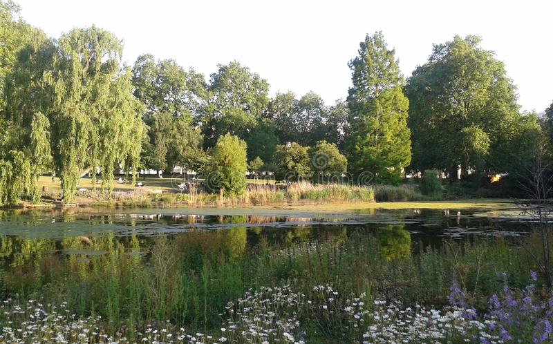 St James`s Park, Summer - London Parks royalty free stock photography
