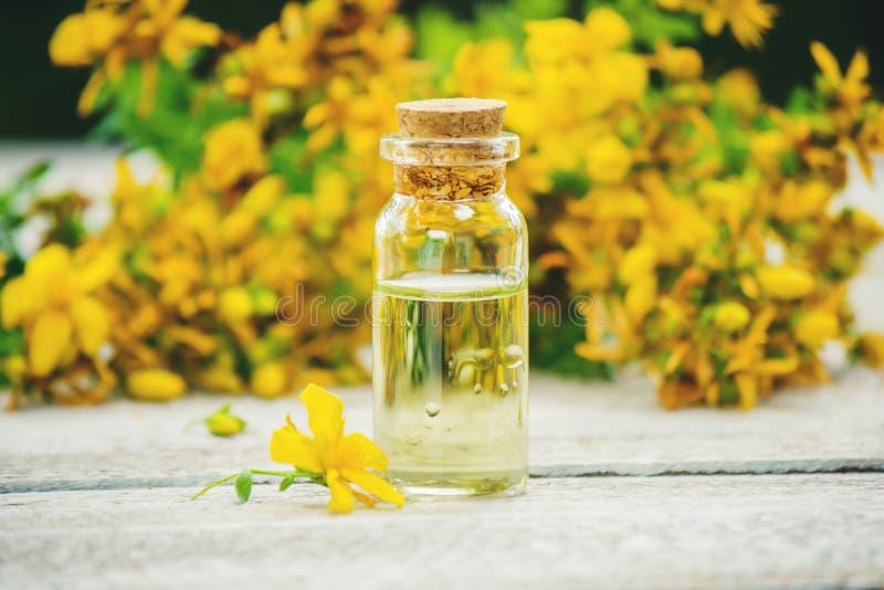 St. John`s wort medicinal. Homeopathy. Selective focus stock photography