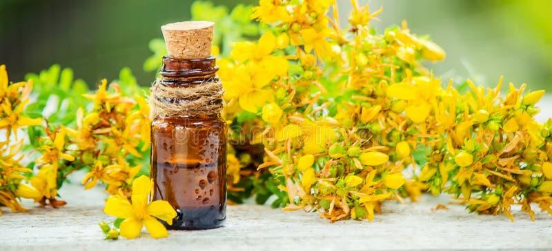 St. John`s wort medicinal. Homeopathy. Selective focus royalty free stock images