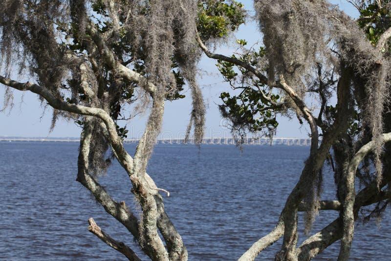 St. Johns River в Флориде стоковые изображения rf