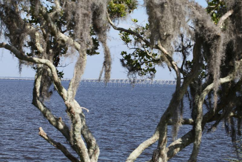 St. Johns River в Флориде стоковые фотографии rf