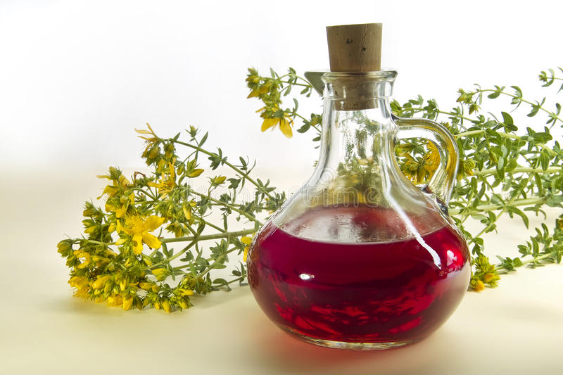 Download St.Johns wort stock image. Image of blossoms, herb, broth - 19874649