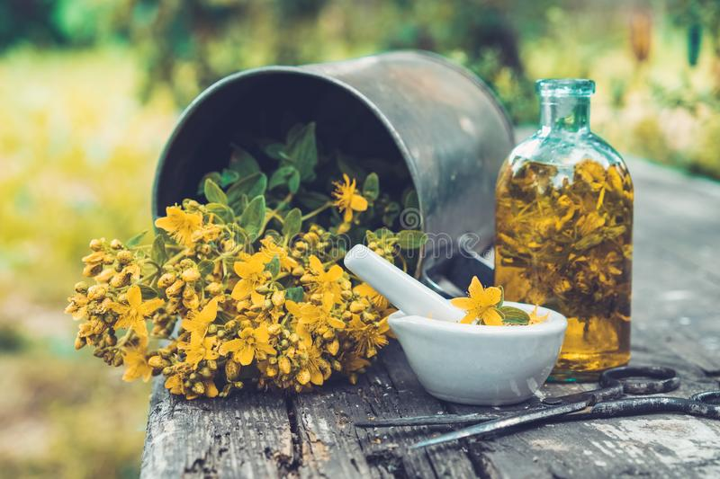 St Johns wort flowers, oil or infusion bottle, mortar and big vintage metal mug of Hypericum plants on wooden board. St Johns wort flowers, oil or infusion stock photo