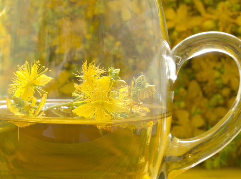 St Jonn's wort tea. In the glass cup, detail royalty free stock photos