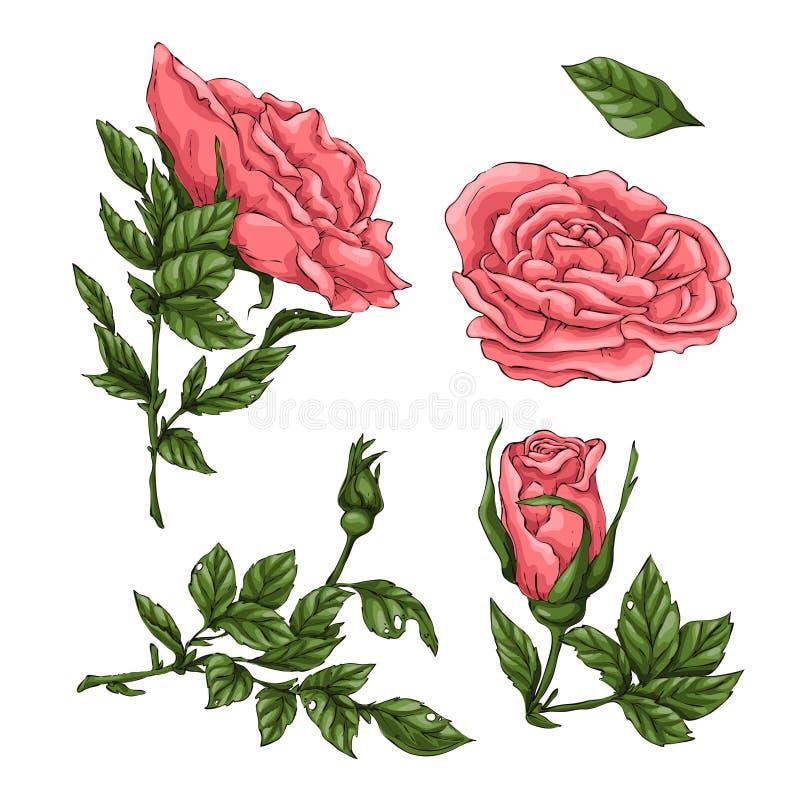 St?ll in av korallrosor Illustration f?r handteckningsvektor royaltyfri illustrationer