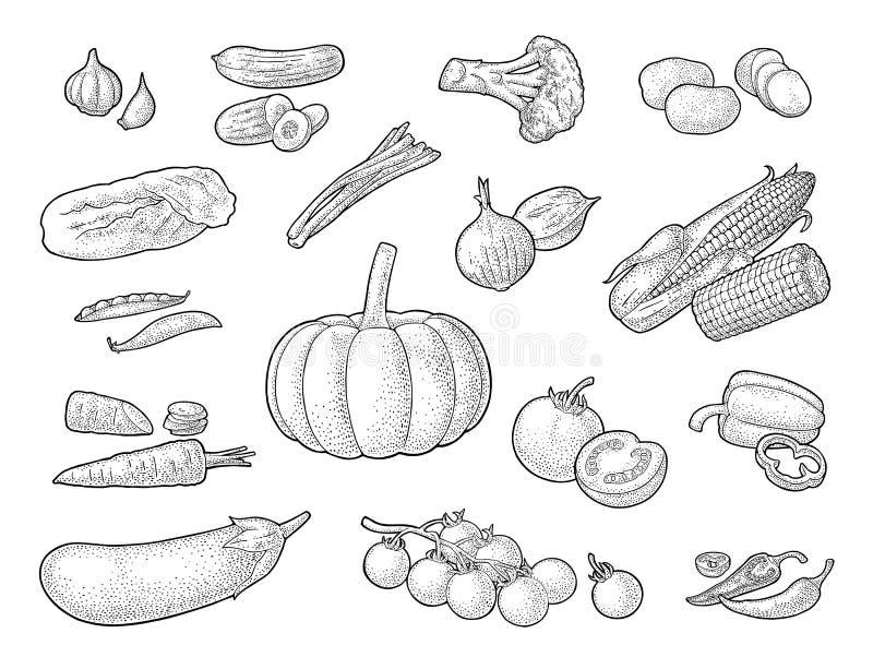 st?ll in gr?nsaker Gurkor, vitl?k, havre, peppar, broccoli, potatis och tomat vektor illustrationer
