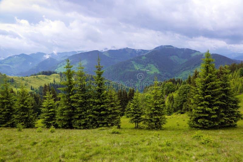 St?llet av turister vilar Carpathians Ukraina Europa Den trevliga sikten till landskapet av höga berg öppnas från dalen royaltyfria bilder