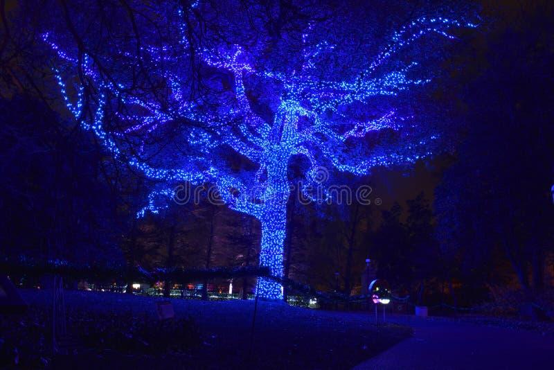 St. Louis, Missouri, los E.E.U.U. - 22 de noviembre de 2017: Luces del árbol en el jardín fotografía de archivo libre de regalías