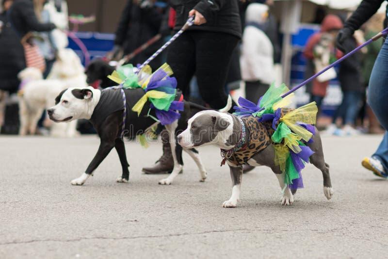 Beggin' Pet Parade royalty free stock photography