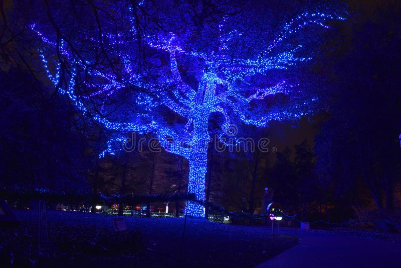 St Louis, Missouri, USA - Nov 22 2017: Tree Lights at the Garden royalty free stock photography