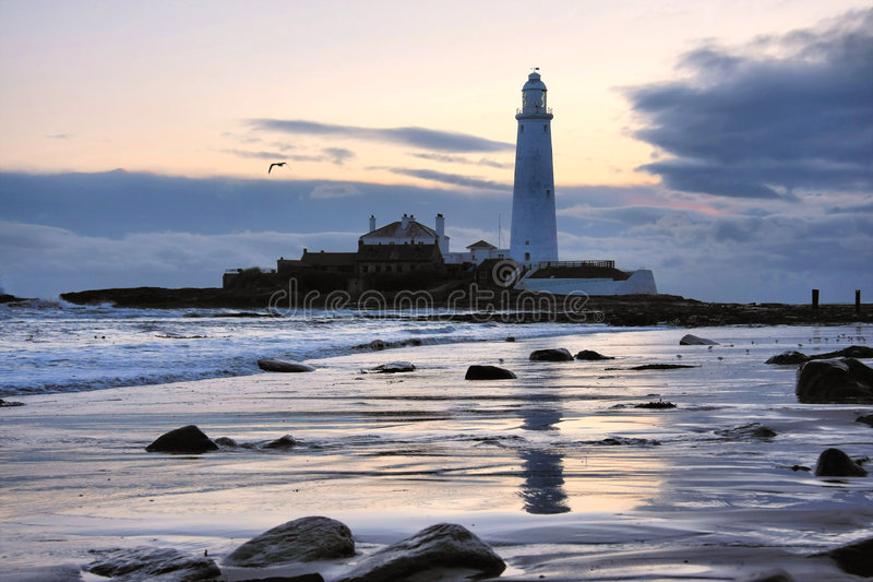 St Mary S Lighthouse And Gull Royalty Free Stock Photo