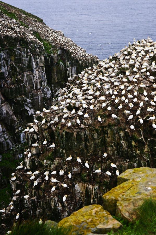 St. Mary van de kaap Vogelreservaat in Newfo stock fotografie