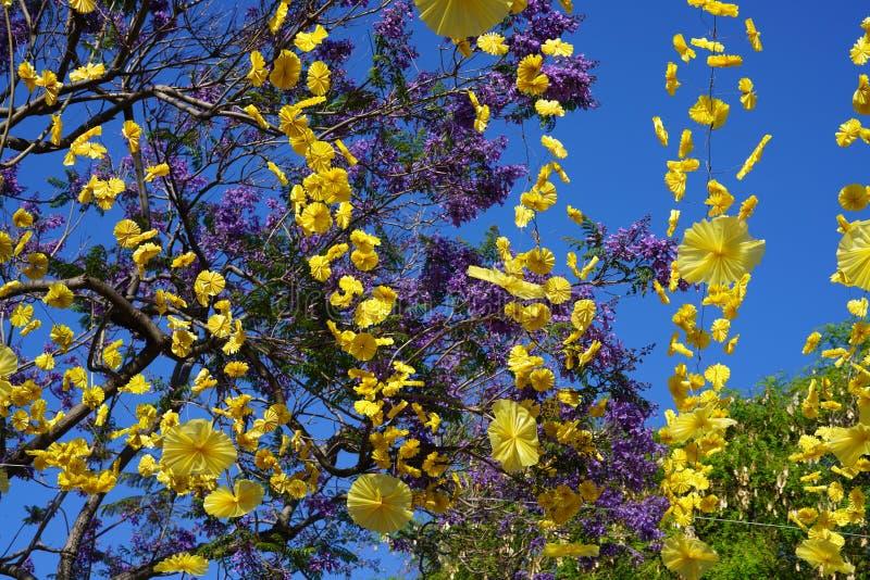 St?ng sig upp med specifika blommor f?r madeiran fotografering för bildbyråer