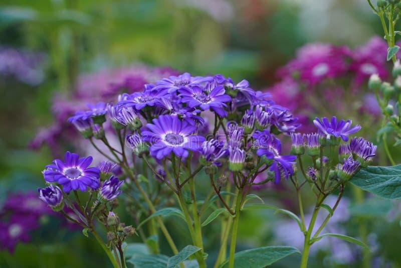 St?ng sig upp med specifika blommor f?r madeiran royaltyfri bild