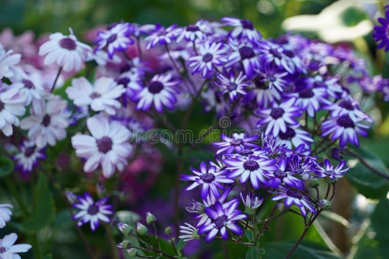 St?ng sig upp med specifika blommor f?r madeiran arkivfoton