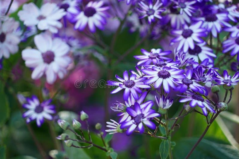 St?ng sig upp med specifika blommor f?r madeiran arkivbilder