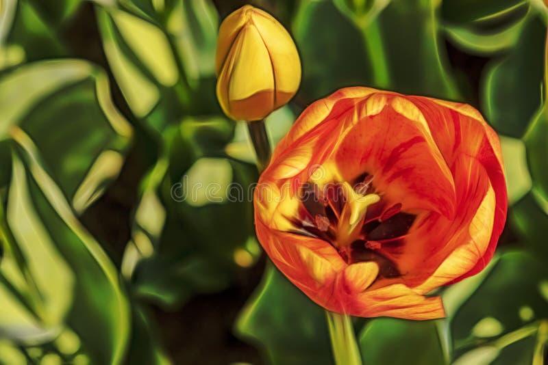 St?ng sig upp tulpan i natur fotografering för bildbyråer